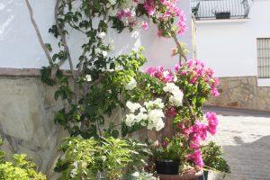La Viñuela - detalle flores