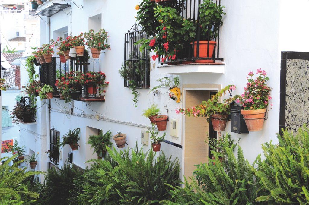 Algarrobo (Calle típica)